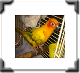 birds, cats, dogs we take provide pet care to all